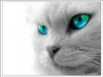 http://vosblogssurvivor.forumsactifs.com/users/1415/19/37/40/avatars/4-37.jpg